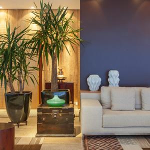 Escola pr arte paisagismo plantas para interiores for Arbustos para interiores