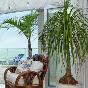 Paisagismo plantas para interiores - Plantas grandes para interiores ...